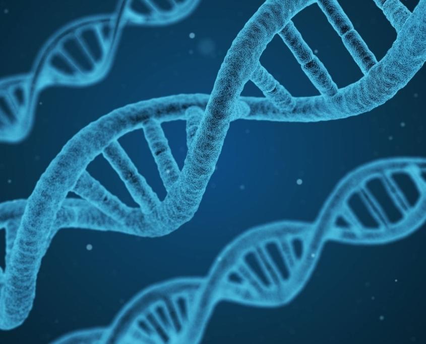 Biokemi - DNA