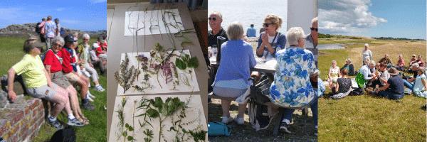 Glædens øjeblikke og Djurslands vilde planter uge 31 på Rønde Højskole